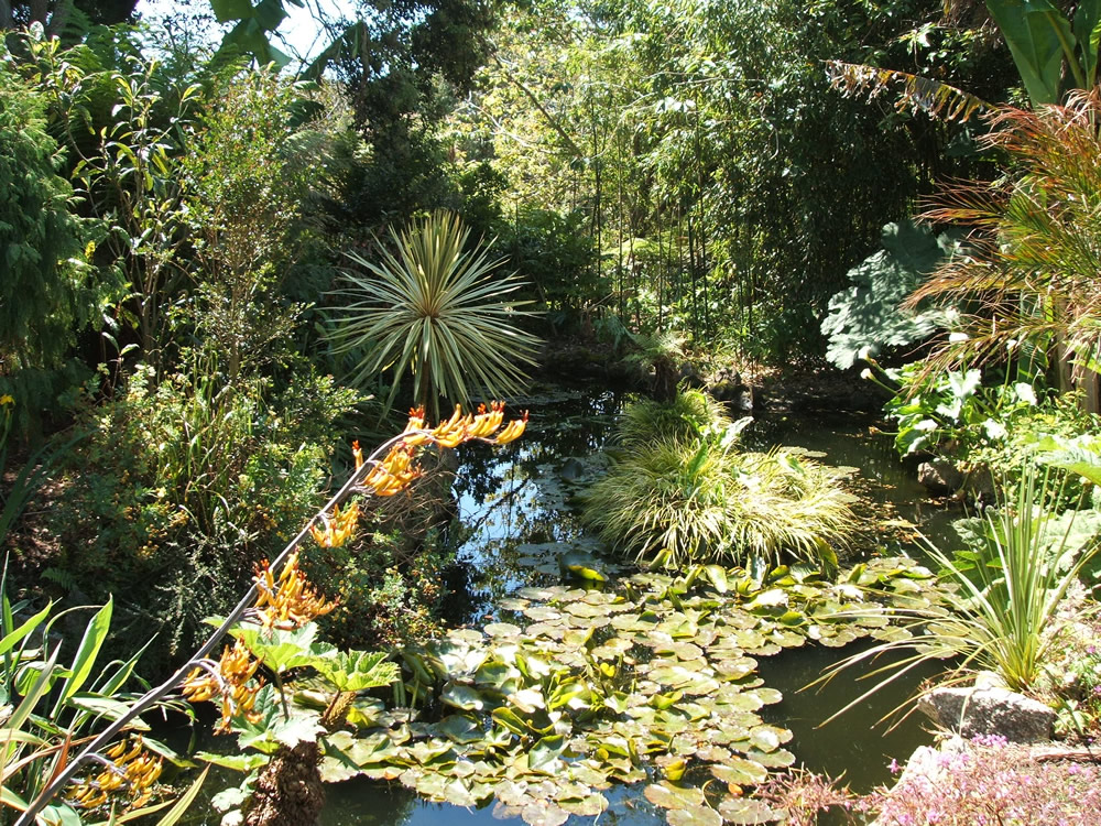 Purely penzance morrab sub tropical gardens penlee park for Pond fish plants