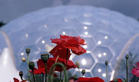 eden project cornwall tourist attractions